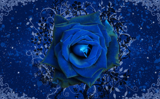 Обои Цветок синей розы среди абстрактных линий