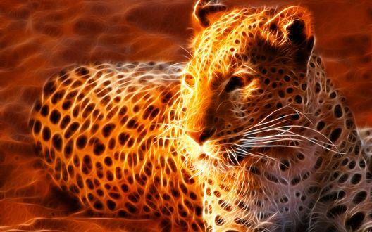 Обои Огненный леопард лежит на песке