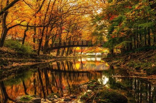 Обои Дугообразный, пешеходный мост, проходящий через пруд в осеннем парке