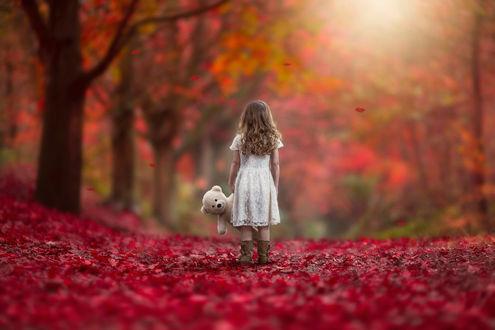 Обои Девочка с длинными волосами, держащая в руках плюшевого медвежонка, идущая по лесной дороге, усыпанной густым слоем красных, осенних листьев