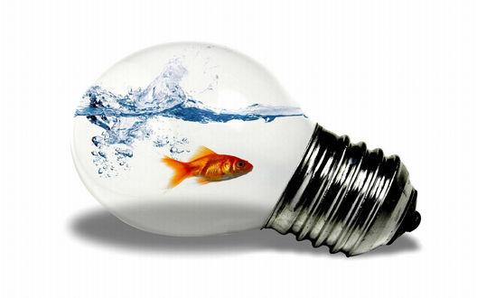 Обои В лампочке с водой плавает золотая рыбка