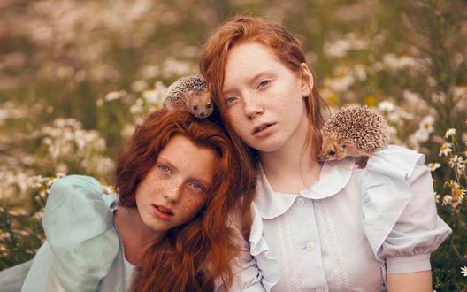 Обои Две рыжеволосые девочки с ежиками сидят в поле возле белых цветов