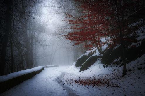 Обои Деревья с красными листьями, растущие на заснеженной обочине дороги и скального образования на фоне густого, серого тумана над дорогой и между деревьями