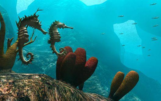 Обои Морские коньки на дне океана