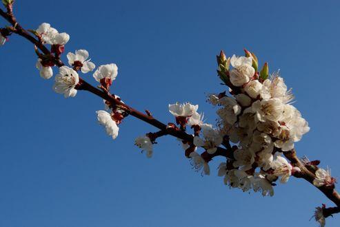 Обои Весеннее цветение деревьев