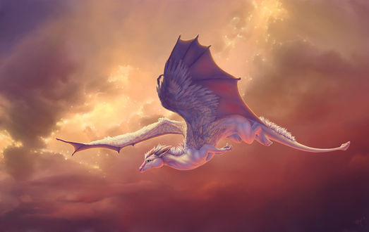 Обои Белый дракон в небе