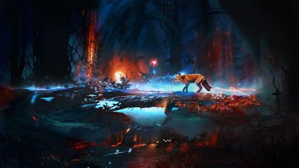 Обои Лиса стоит у водоема в ночном лесу