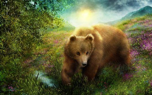 Обои Медведь стоит на зеленой поляне у воды, ярко светит солнце