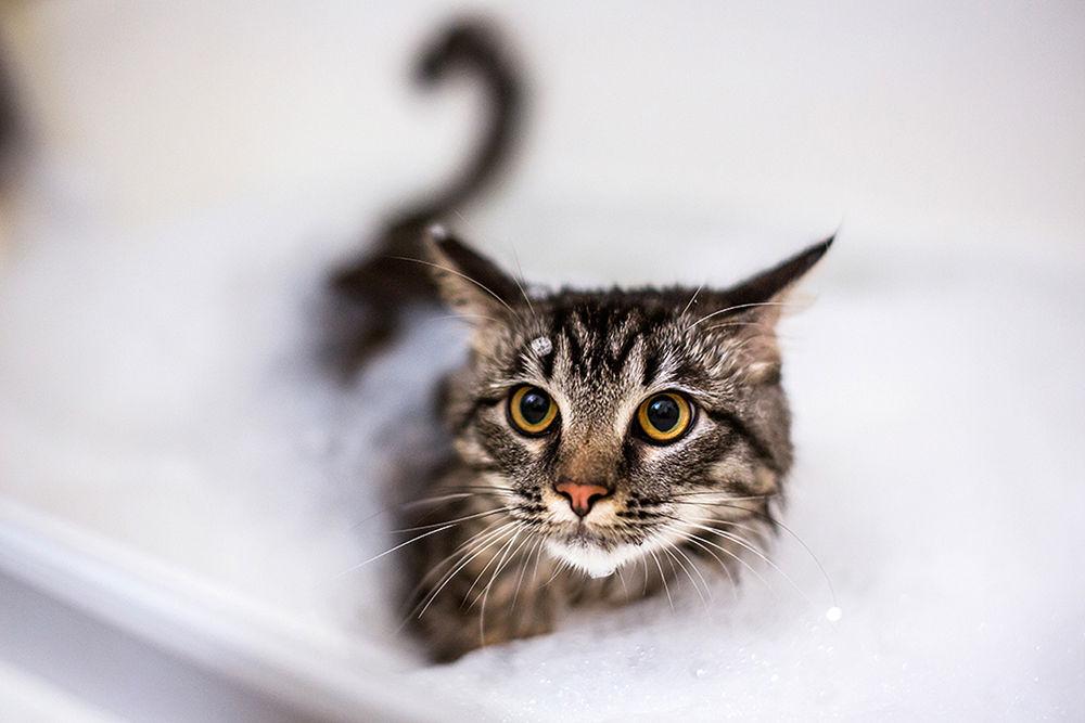 Инструкция по мытью кошек