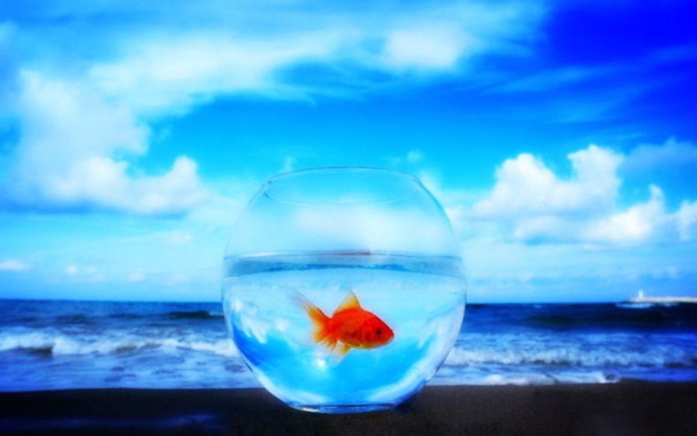 Обои Золотая рыбка в аквариуме на берегу моря на рабочий стол