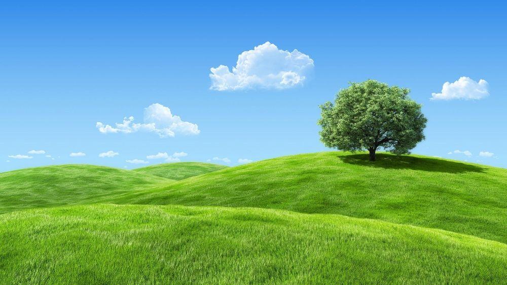 Обои Одинокое дерево с густой, лиственной кроной, стоящее ...