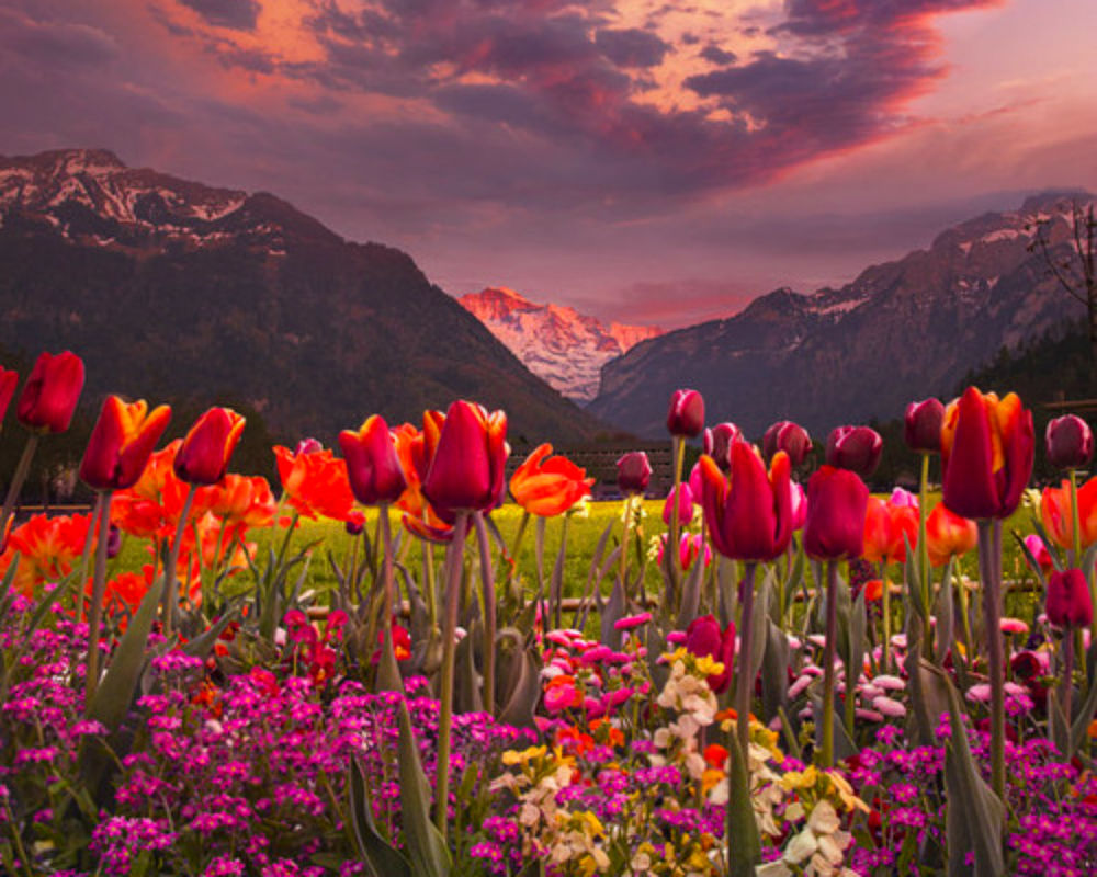 Картинки цветов поля