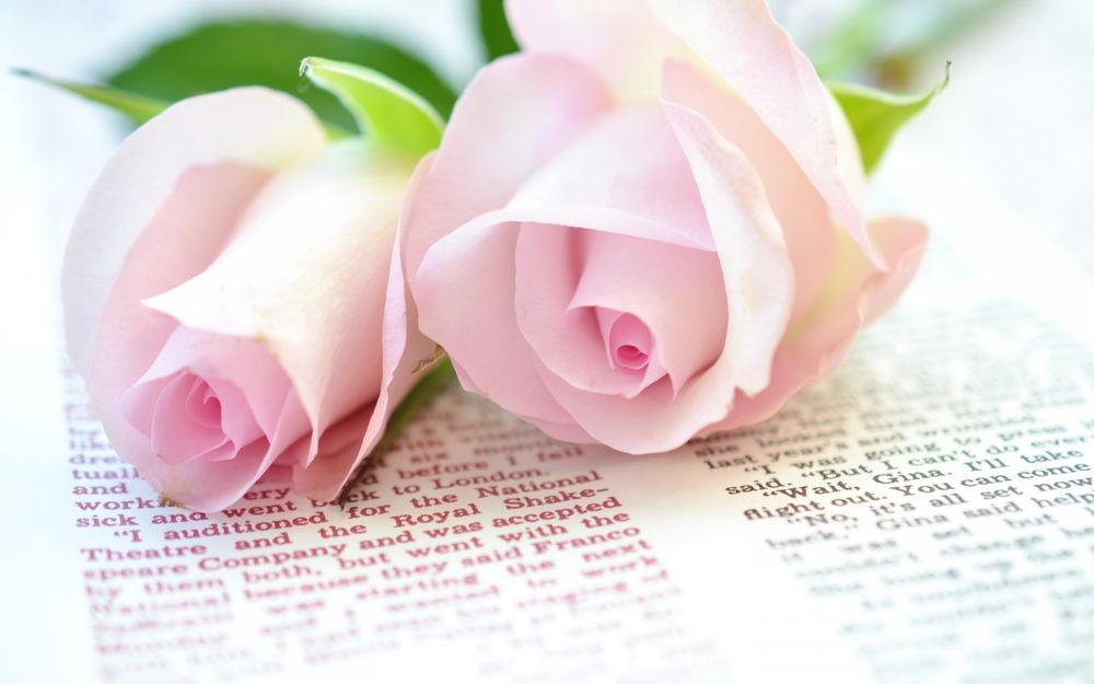 Красивые бледно розовые