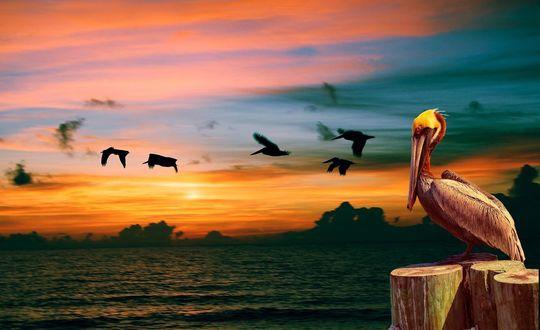 Обои Пеликан сидит на деревянном столбике на берегу моря, на фоне утренней зари. В небе летят птицы