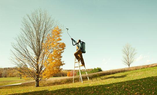 Обои Мужчина стоит на лестнице и пылесосом собирает сухие желтые листья с веток дерева