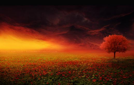 Обои Дерево с красными листьями, растущее среди цветущего макового поля, освещенного из-за гор солнечными лучами на фоне темного неба, парящих в воздухе птиц и листьев, опадавших с дерева, автор RazielMB