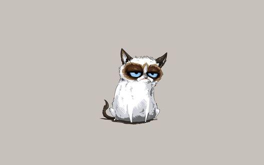 Обои Грустный кот / Grumpy Cat на сером фоне