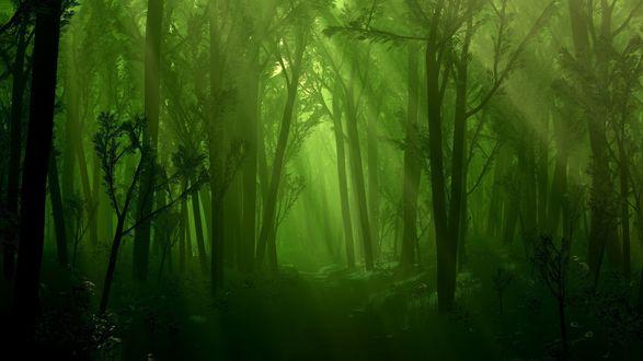 Обои Темный зеленый лес, куда не проникает солнечный свет