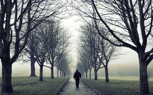 Обои Одинокий мужчина идет по аллее осенью, в дождливый день, автор Musical Fish