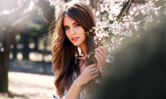 Обои Девушка с цветущей веткой яблони