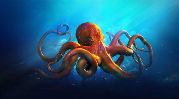 Обои Коричневый осьминог плавает в синей воде