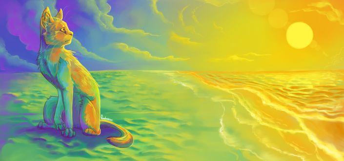 Обои Кошка сидит на берегу моря, освещенная желтым светом Солнца