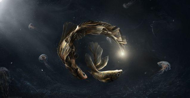 Обои Игры рыб под водой в присутствии медуз