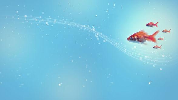 Обои Золотые рыбки в углу голубой текстуры