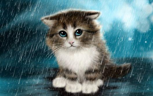 Обои Бездомный, серый котенок с грустными, зелеными глазами, сидящий на дороге под проливным дождем