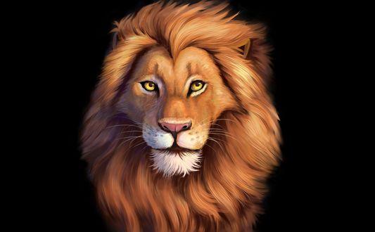 лев голова обои