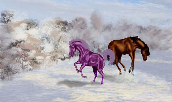 Обои Вороная и сиреневая лошади резвятся на заснеженном лугу