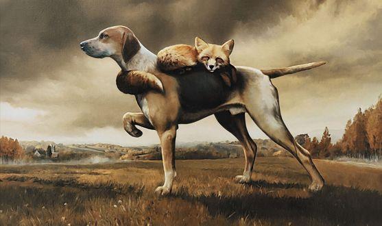 Обои Охотничий пес везет на себе спящую лису, которая обняла его своим хвостом за шею, авторские права принадлежат агенству Saatchi & Saatchi, Милан, Италия / Milan, Italy