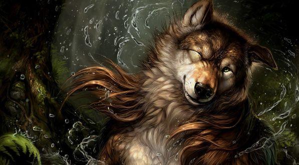 Обои Собака выйдя с речки отряхивается, поднимая кучи брызг и прищурив один глаз
