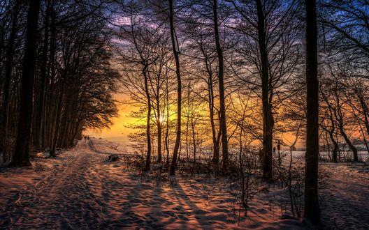 Обои Восходящие солнечные лучи на утреннем небосклоне, осветили заснеженную дорогу, проходящую вдоль деревьев с идущими по ней людьми