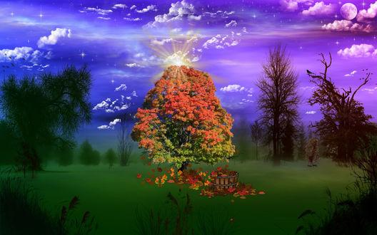 Обои Дерево посреди покрытой, стелющимся по земле, туманом лужайки, с разноцветными осенними листьями, осыпающимися на землю. Часть которых собрана в стоящий под деревом деревянный бочонок
