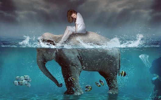 Обои У слона стоящего в воде, на спине сидит девушка наблюдающая за рыбками