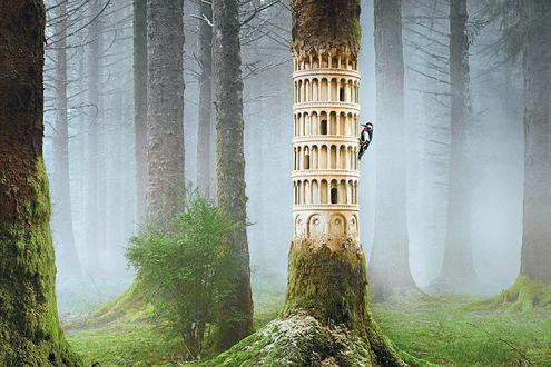 Обои Дятел выклевывает со ствола дерева архитектурное сооружение Пизанскую падающую башня в Пизе, Италия