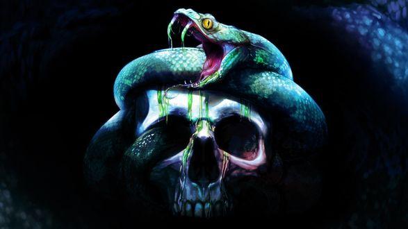 Обои На человечьем черепе сидит змея, с зубов которой стекает зеленый яд