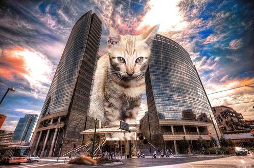 Обои Огромный кот проходит между высотных домов
