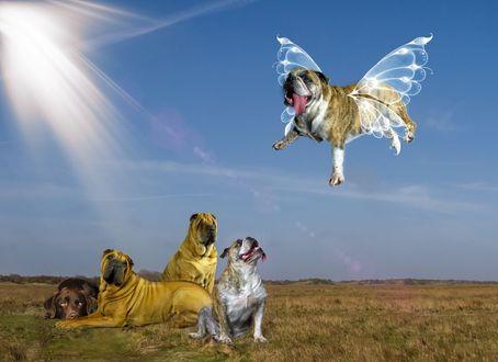 Обои Четыре собаки наблюдают, как ихний товарищ пес летает при помощи прозрачных крыльев