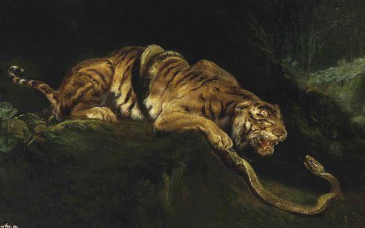 Обои Битва тигра со змеей, которая обвила его тело
