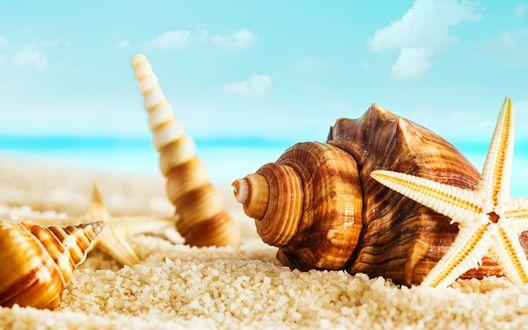 Обои Раковины различной формы и размера и морские звезды, лежащие на песчаном пляже океанского побережья на фоне голубого неба с белыми, кучевыми облаками