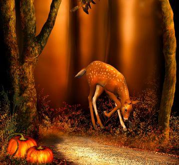 Обои Молодая олениха пасется на обочине лесной дороги, с противоположной стороны дороги лежат в траве две тыквы