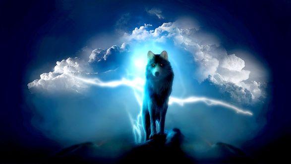 Обои Волк стоит на скале на фоне облачного неба, освещенного вспышками молний