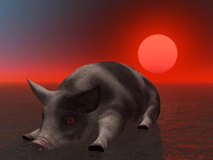 Обои Свинья лежит уткнувшись мордой в воду на фоне заката