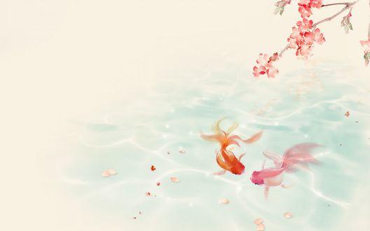 Обои В прозрачной воде пруда плавают рыбки, на воду опадают лепестки с цветущей веточки