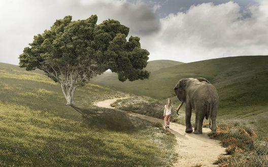 Обои Девочка, держа слона за хобот, идут по песочной дороге мимо растущего дерева среди холмов
