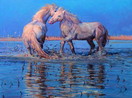 Обои Две белые лошади играют, стоя в воде