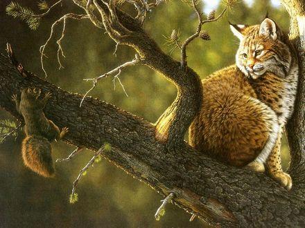Обои Рысь, сидящая на стволе дерева, смотрит на испуганную белочку