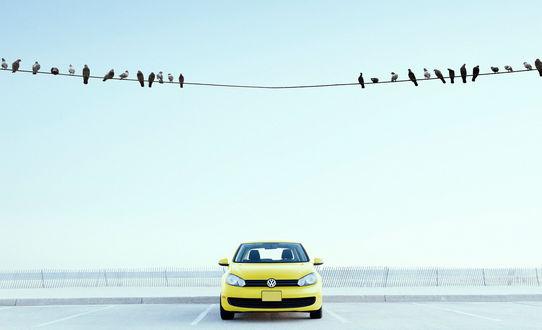 Обои Птицы на проводе оставили просвет между собой над стоящим внизу авто, что бы не изгадить его